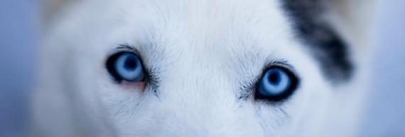 Wolf Eyes570x194