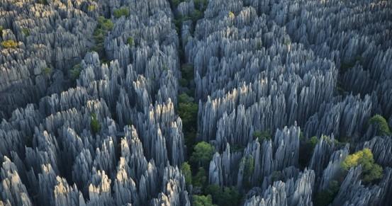 foresta di pietra 1
