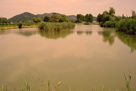 lispida- lagoo
