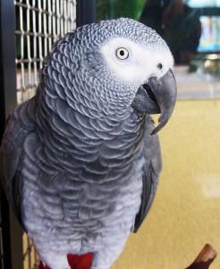 I pappagalli del Congo, per educazione, non discutono di politica e religione; Inception ha fornito loro almeno un decennio di chiacchiere politicamente corrette.