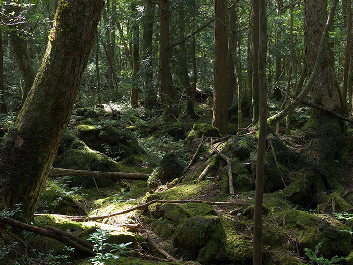 Aokigahara_the_forest_film