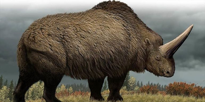 Siberian-Unicorn-Roamed-The-Earth-29000-Years-Ago-Study-Reveals-3