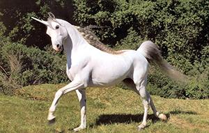 unicorn-03